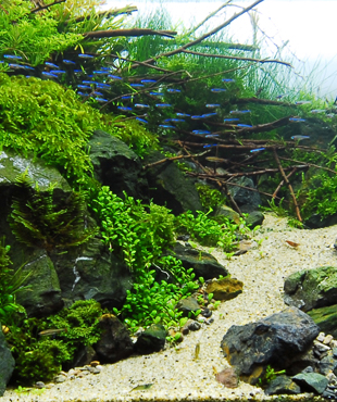 Curso de Aquascape